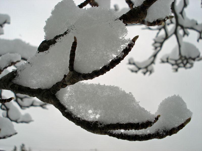 Winter's claw