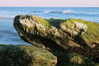 BeachDragon
