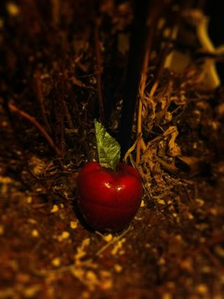 AppleOfTemptation?